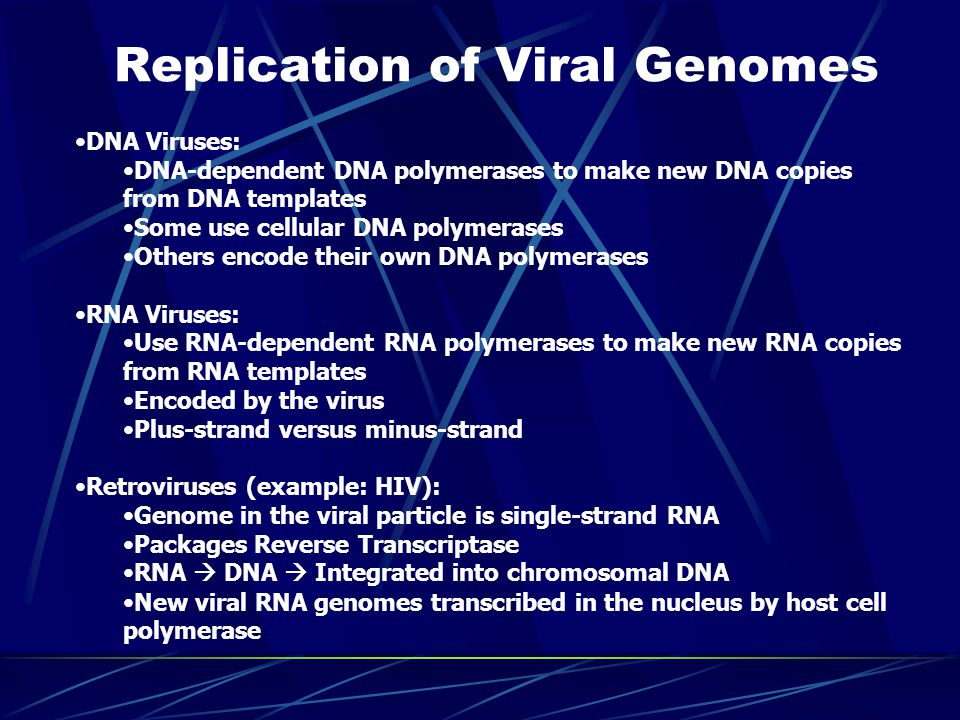 Replication of Viral Genomes DNA Viruses: DNA-dependent DNA polymerases to make new DNA copies from DNA templates Some use cellular DNA polymerases Others encode their own DNA polymerases RNA Viruses: Use RNA-dependent RNA polymerases to make new RNA copies from RNA templates Encoded by the virus Plus-strand versus minus-strand Retroviruses (example: HIV): Genome in the viral particle is single-strand RNA Packages Reverse Transcriptase RNA  DNA  Integrated into chromosomal DNA New viral RNA genomes transcribed in the nucleus by host cell polymerase