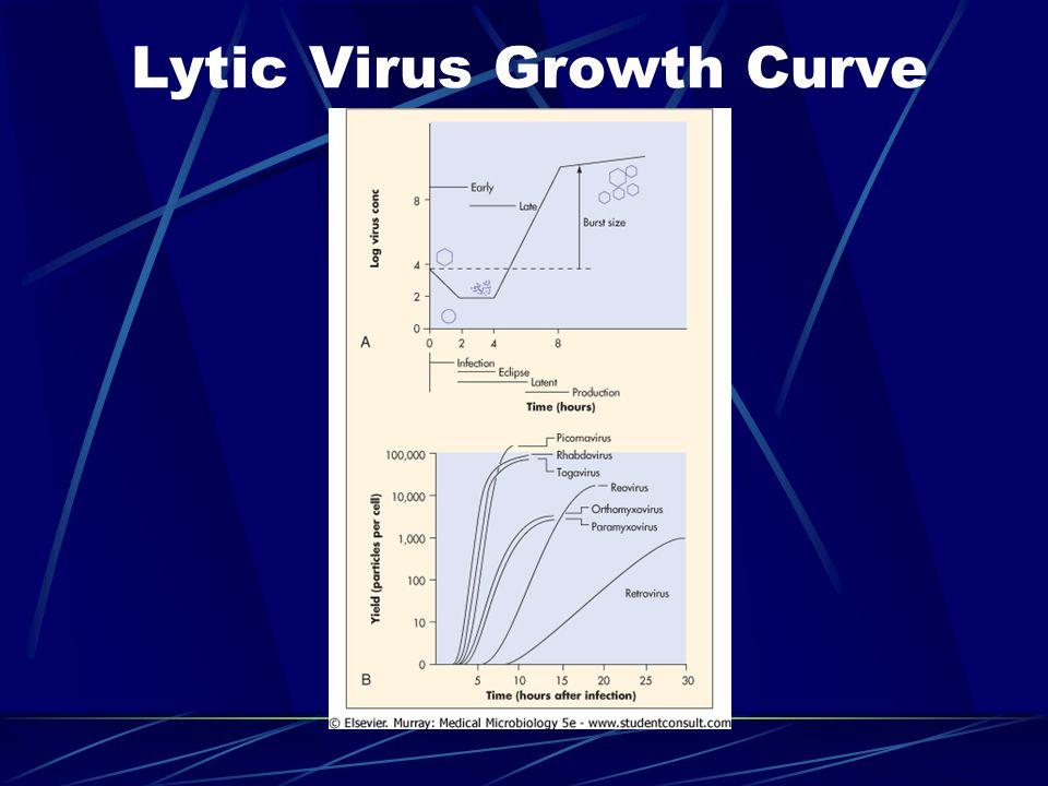 Lytic Virus Growth Curve