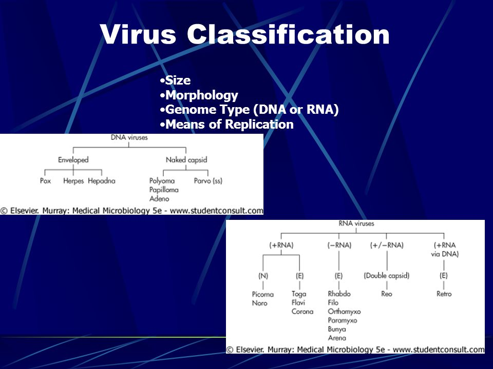 Virus Classification Size Morphology Genome Type (DNA or RNA) Means of Replication