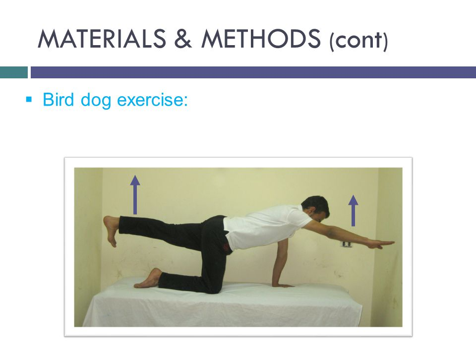 MATERIALS & METHODS ( cont )  Bird dog exercise: