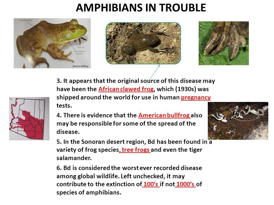 AMPHIBIANS IN TROUBLE 3.