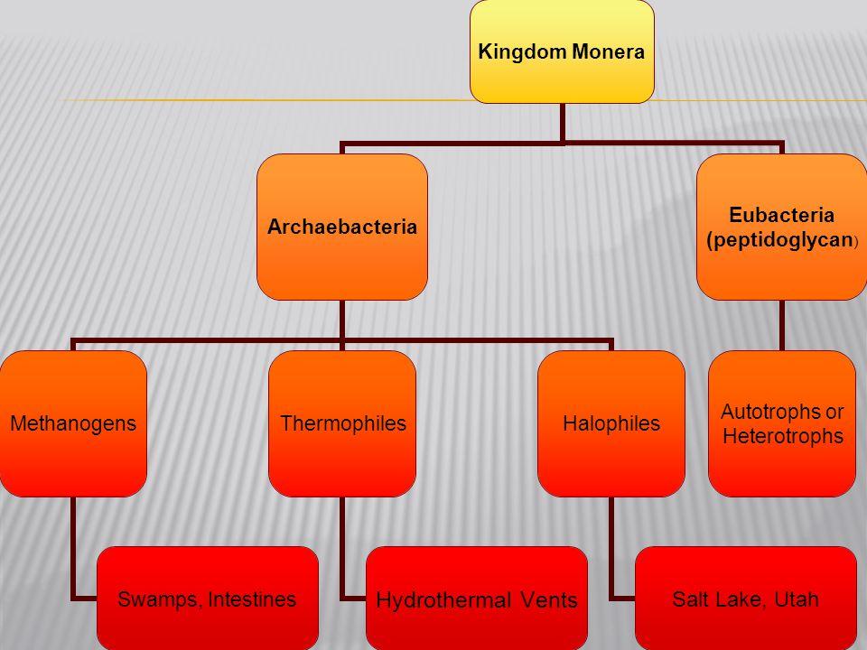 Kingdom Monera Archaebacteria Methanogens Swamps, Intestines Thermophiles Hydrothermal Vents Halophiles Salt Lake, Utah Eubacteria (peptidoglycan) Aut