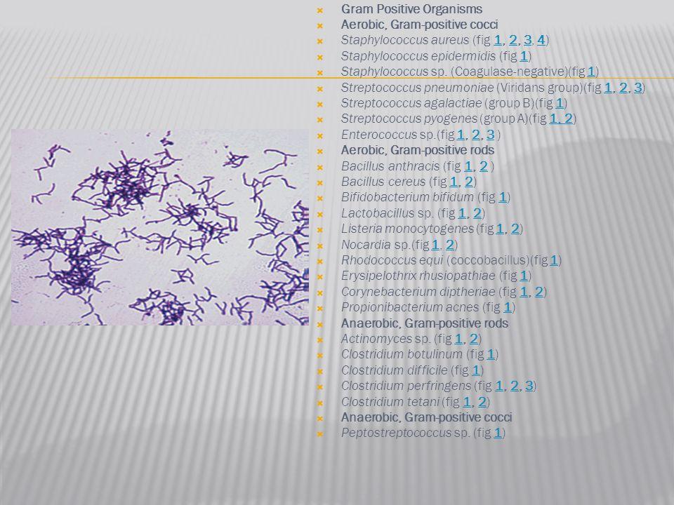  Gram Positive Organisms  Aerobic, Gram-positive cocci  Staphylococcus aureus (fig 1, 2, 3, 4)1234  Staphylococcus epidermidis (fig 1)1  Staphylo