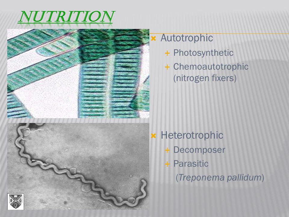  Autotrophic  Photosynthetic  Chemoautotrophic (nitrogen fixers)  Heterotrophic  Decomposer  Parasitic (Treponema pallidum)