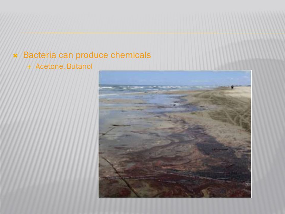  Bacteria can produce chemicals  Acetone, Butanol