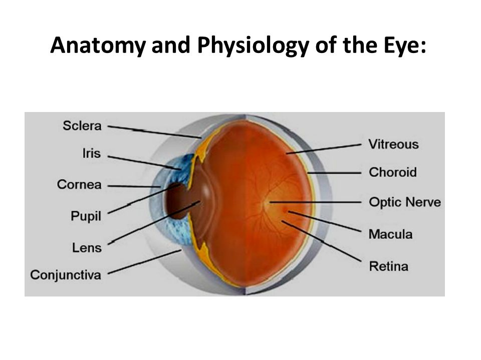 Anatomy and Physiology of the Eye: