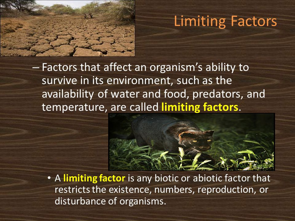 Limiting Factors – Factors that affect an organism's ability to survive in its environment, such as the availability of water and food, predators, and