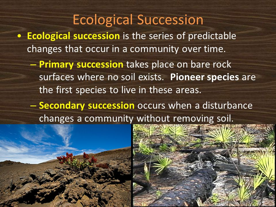 Ecological Succession Ecological succession is the series of predictable changes that occur in a community over time. – Primary succession takes place