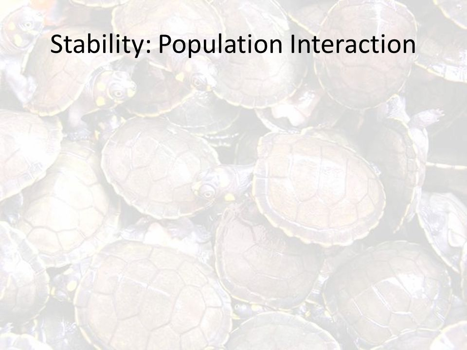 Stability: Population Interaction