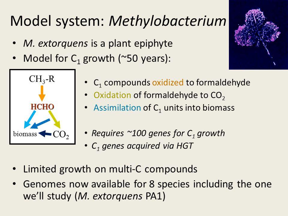 Model system: Methylobacterium M.