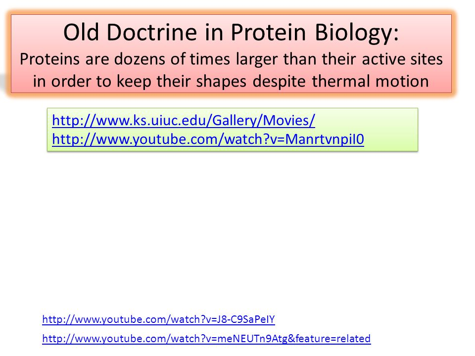 Old Doctrine in Protein Biology: Proteins are dozens of times larger than their active sites in order to keep their shapes despite thermal motion http://www.ks.uiuc.edu/Gallery/Movies/ http://www.youtube.com/watch v=ManrtvnpiI0 http://www.ks.uiuc.edu/Gallery/Movies/ http://www.youtube.com/watch v=ManrtvnpiI0 http://www.youtube.com/watch v=meNEUTn9Atg&feature=related http://www.youtube.com/watch v=J8-C9SaPeIY