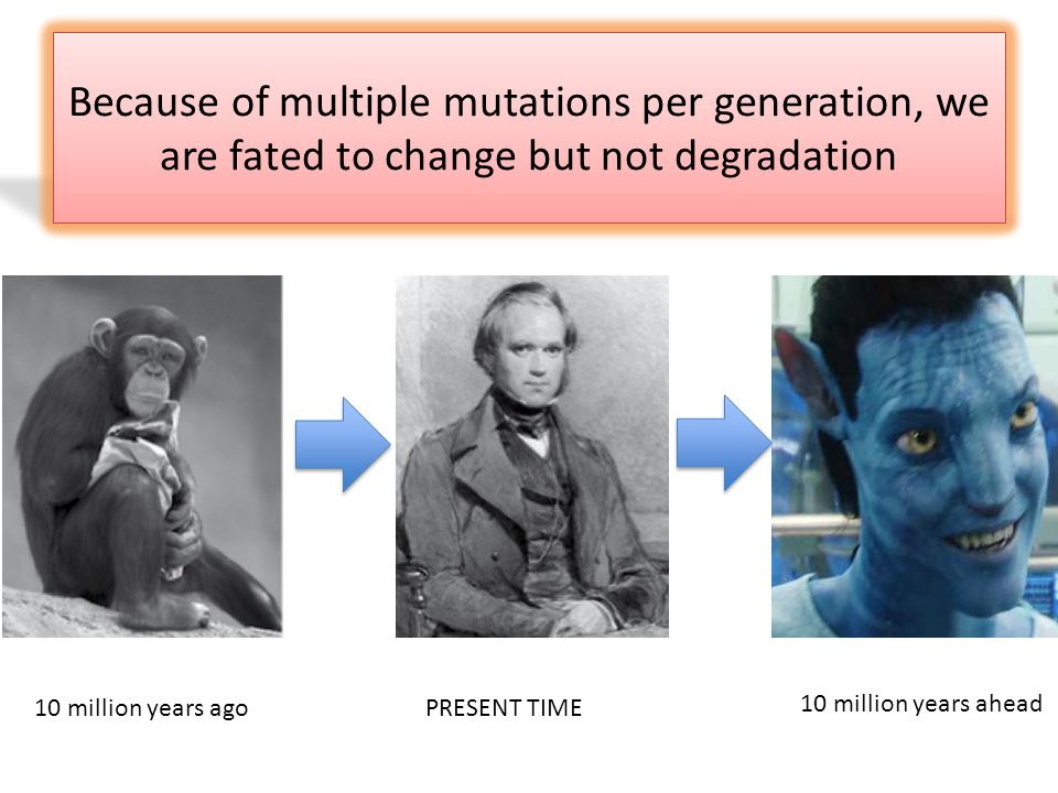 Because of multiple mutations per generation, we are fated to change but not degradation PRESENT TIME10 million years ago 10 million years ahead