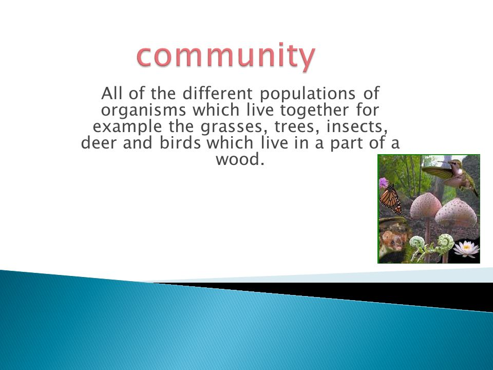 All of the different populations of organisms which live together for example the grasses, trees, insects, deer and birds which live in a part of a wood.