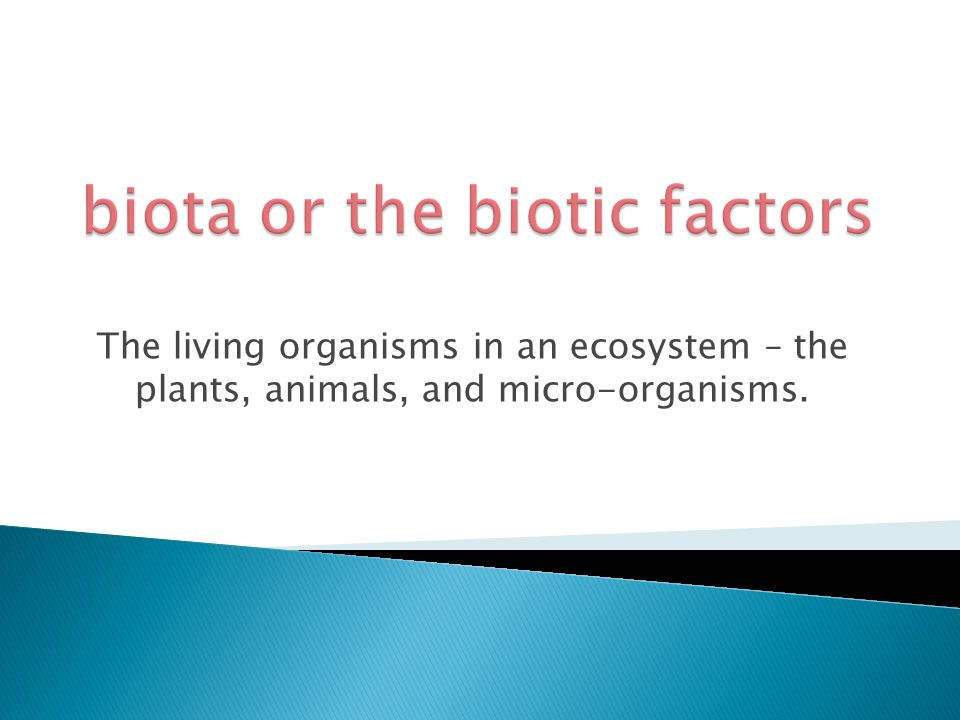 The living organisms in an ecosystem – the plants, animals, and micro-organisms.