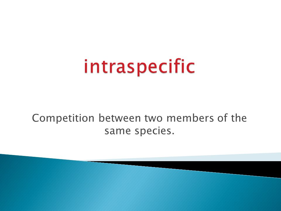 Competition between two members of the same species.