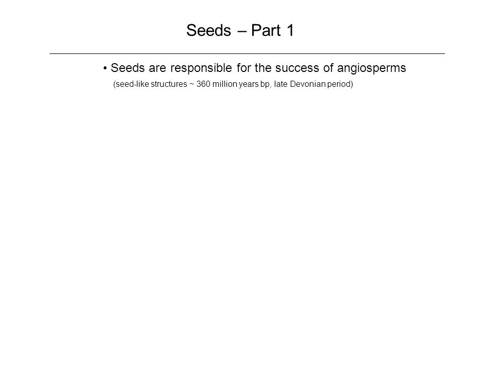 Seeds – Part 1 Seeds are responsible for the success of angiosperms (seed-like structures ~ 360 million years bp, late Devonian period)