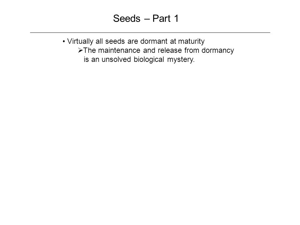 Seeds – Part 1 Virtually all seeds are dormant at maturity  The maintenance and release from dormancy is an unsolved biological mystery.