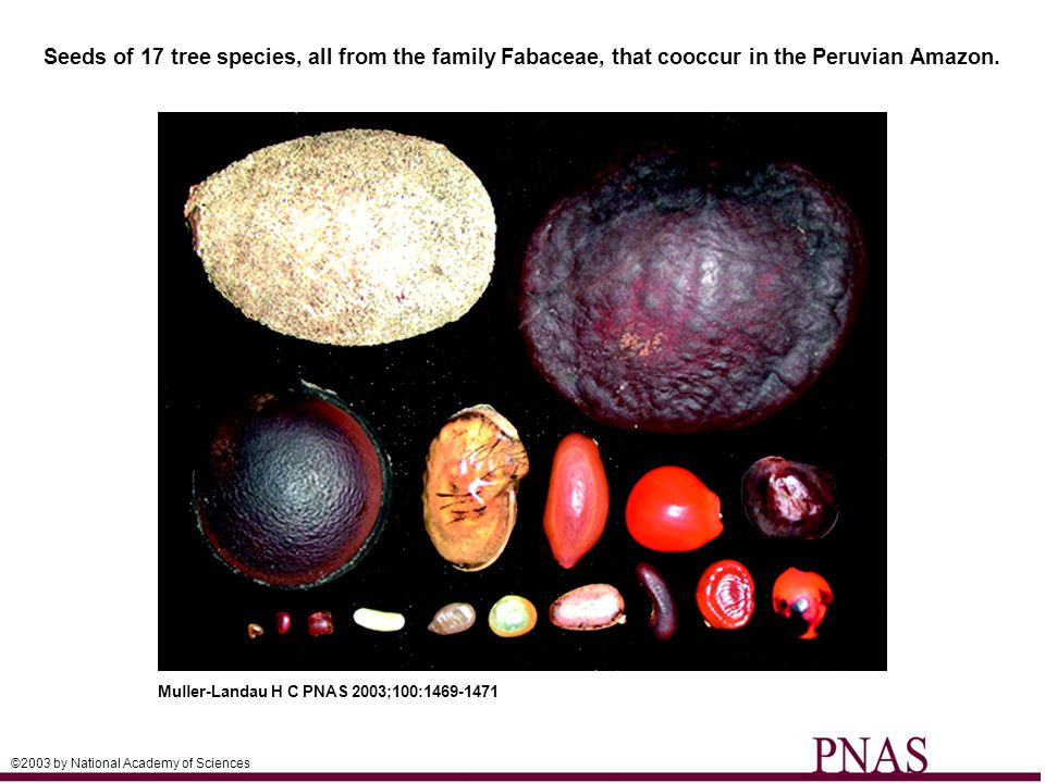 Seeds of 17 tree species, all from the family Fabaceae, that cooccur in the Peruvian Amazon.