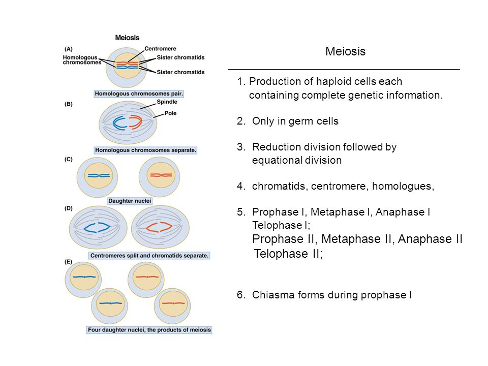 1. Production of haploid cells each containing complete genetic information.