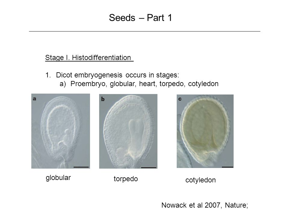 Seeds – Part 1 Stage I.