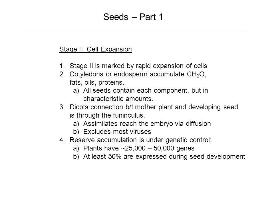 Seeds – Part 1 Stage II.