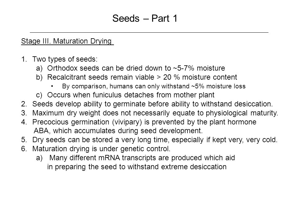 Seeds – Part 1 Stage III.