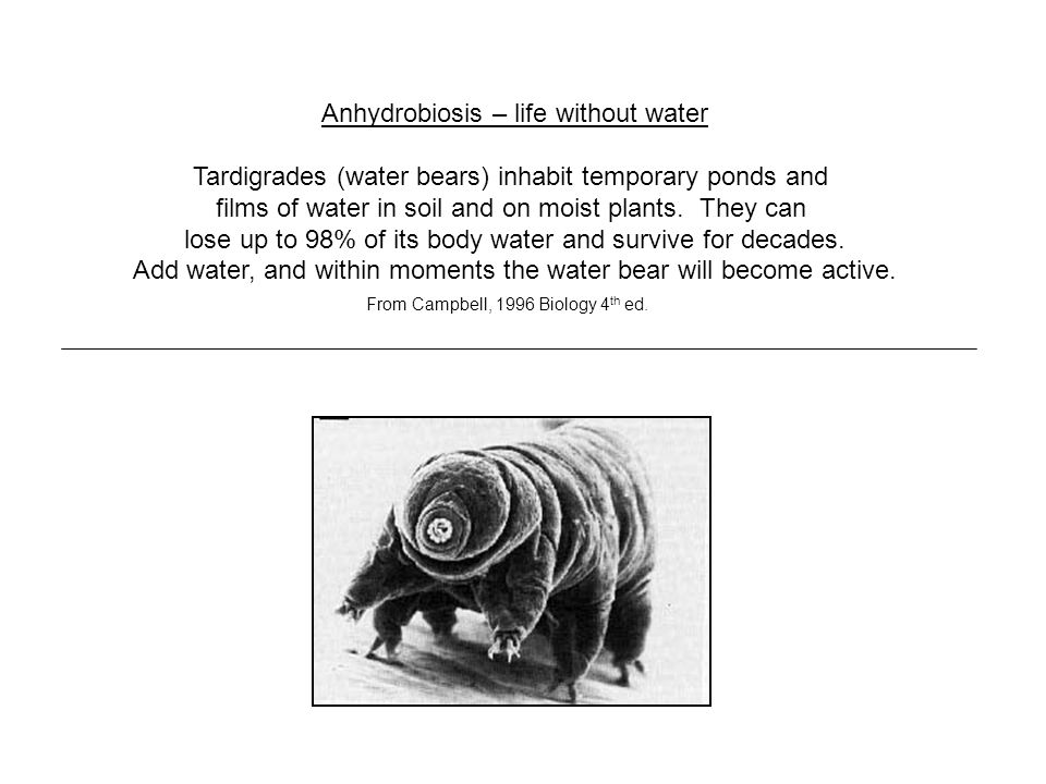 Anhydrobiosis – life without water Tardigrades (water bears) inhabit temporary ponds and films of water in soil and on moist plants.