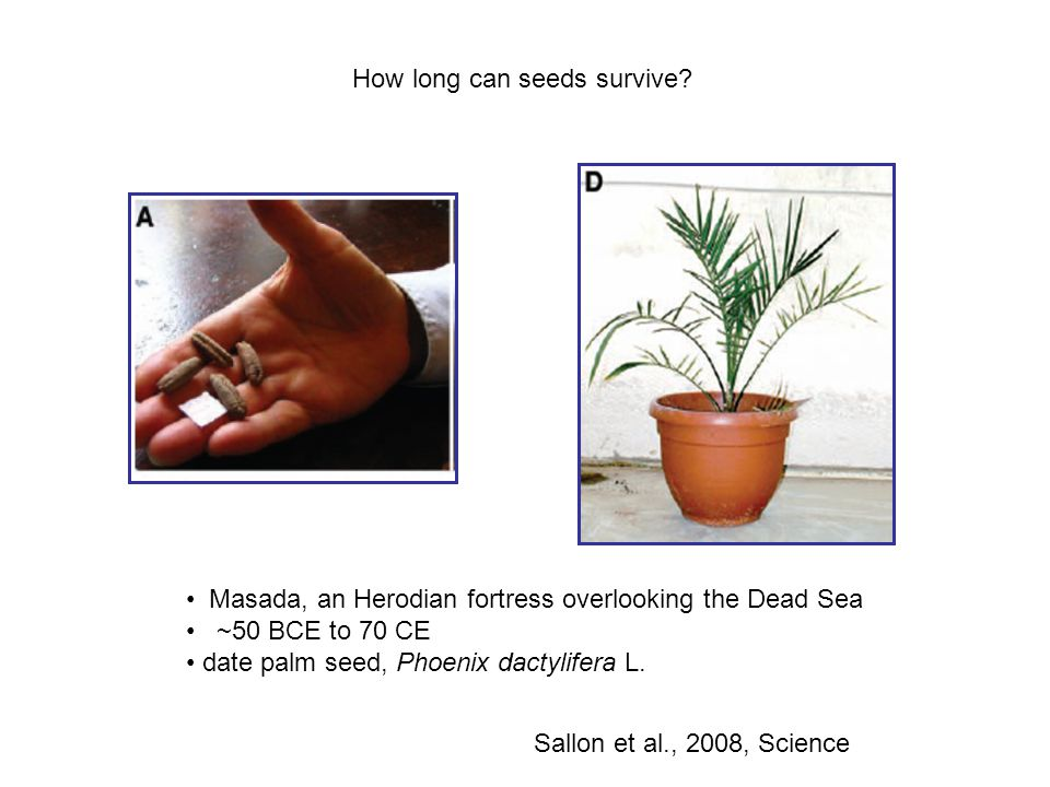 How long can seeds survive.