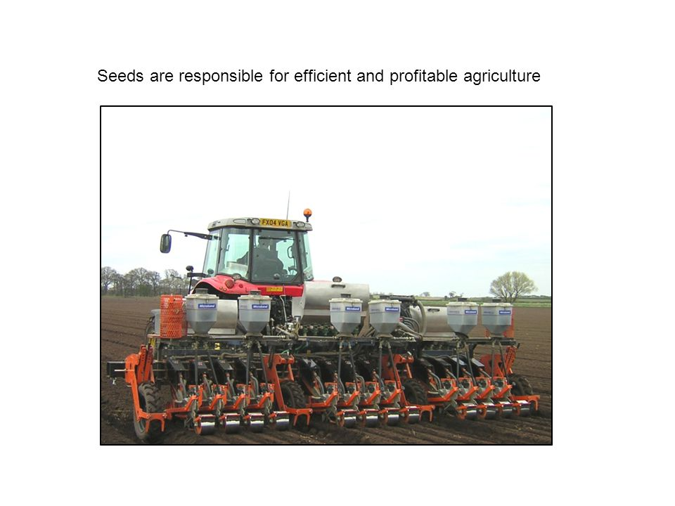 Seeds are responsible for efficient and profitable agriculture
