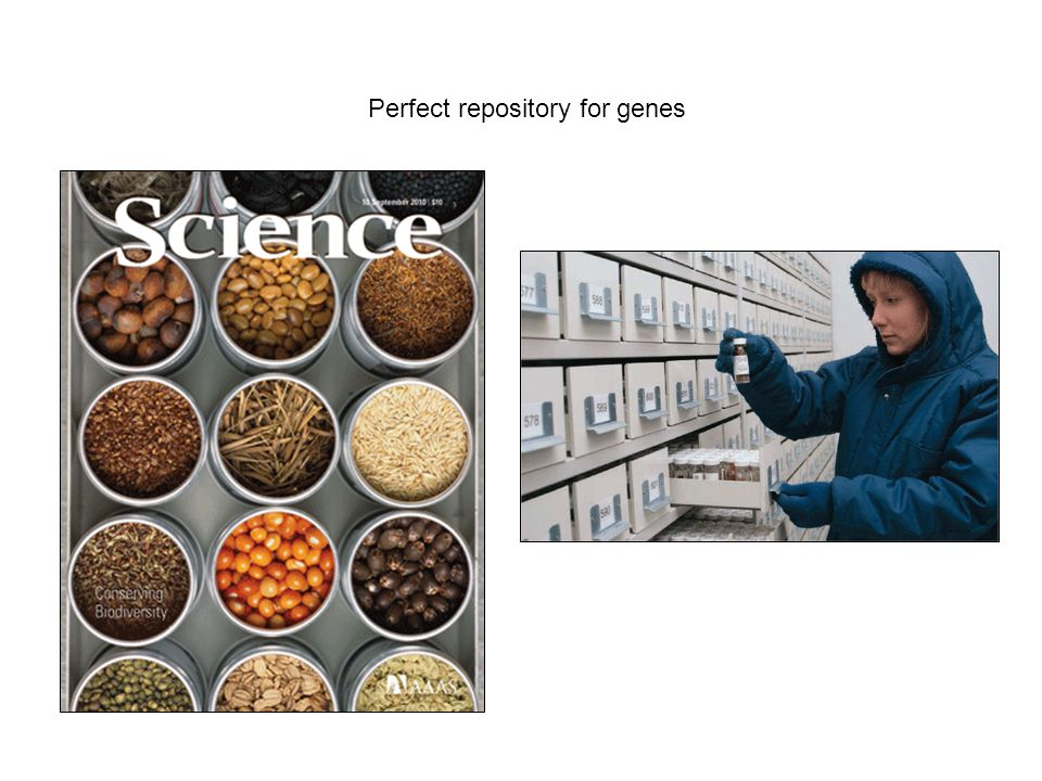 Perfect repository for genes