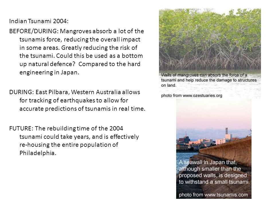 Indian Tsunami 2004: BEFORE/DURING: Mangroves absorb a lot of the tsunamis force, reducing the overall impact in some areas. Greatly reducing the risk
