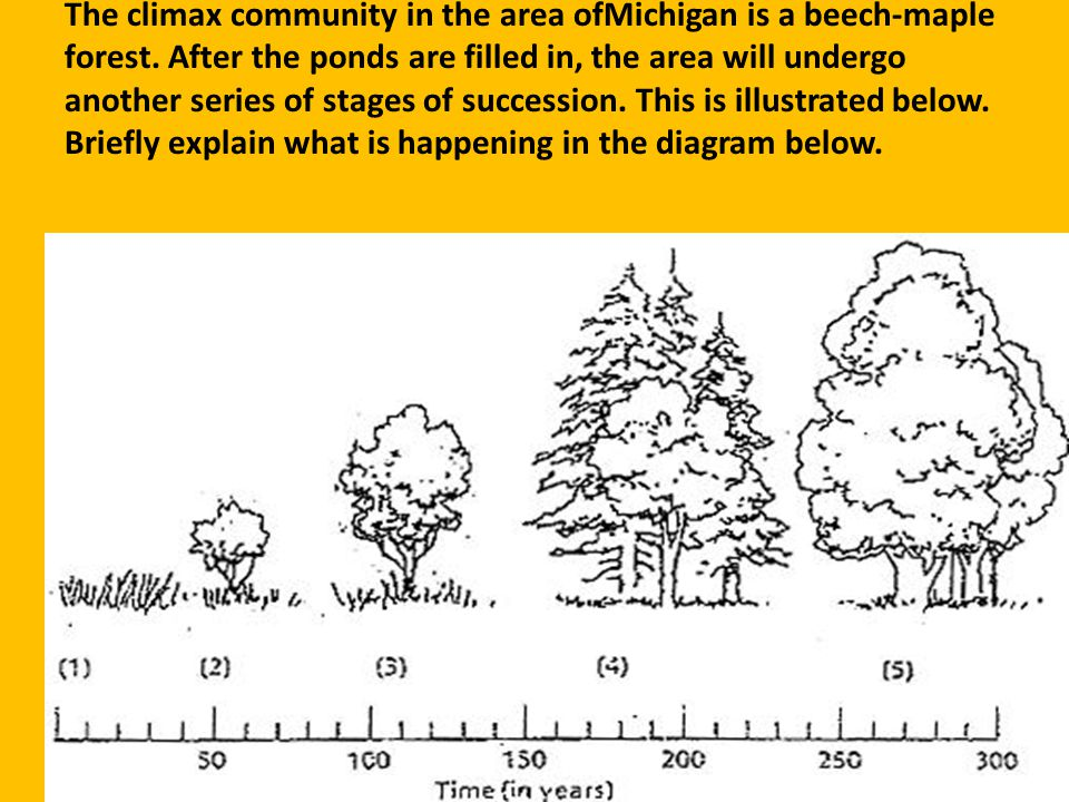 The climax community in the area ofMichigan is a beech-maple forest. After the ponds are filled in, the area will undergo another series of stages of
