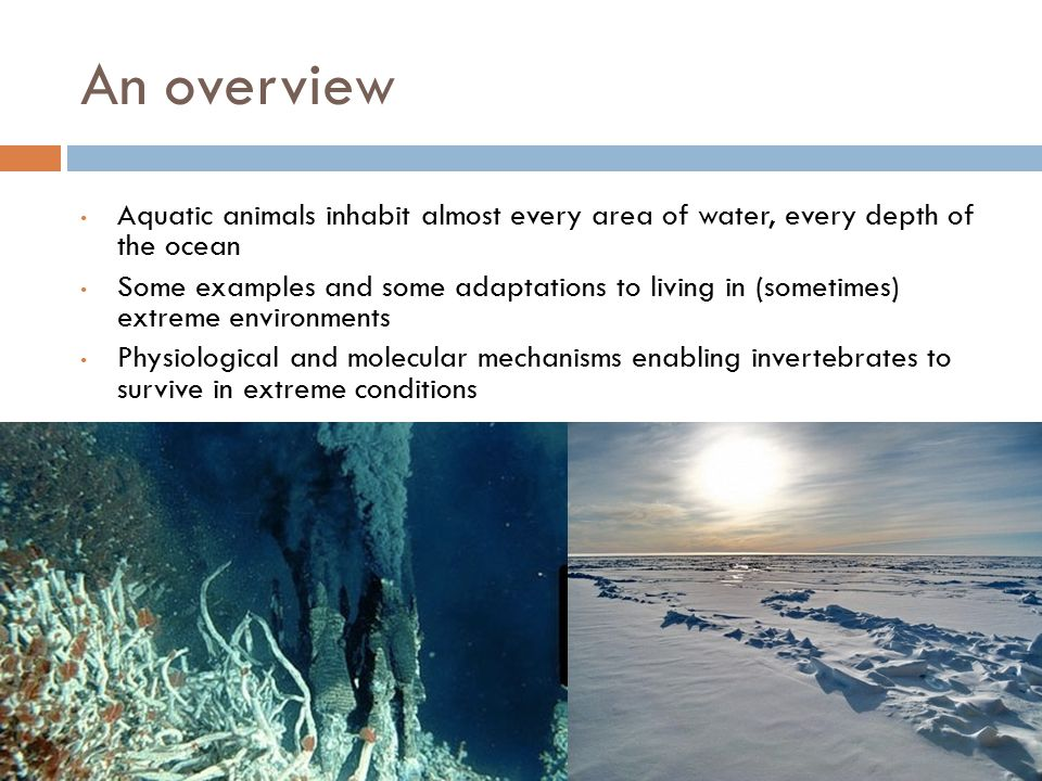 An overview Aquatic animals inhabit almost every area of water, every depth of the ocean Some examples and some adaptations to living in (sometimes) extreme environments Physiological and molecular mechanisms enabling invertebrates to survive in extreme conditions