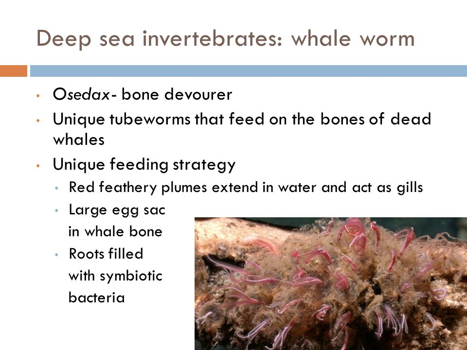 Invertebrates and the Arctic Most common and diverse animals in the arctic ecosystem Long cold winters coupled with short cool summers Winter almost 10 months of the year Ground freeze in September-> thaw in June Mammals: insulated fat and fur for elevated core body temp Invertebrates: body temp similar to environment Desiccation and anoxia