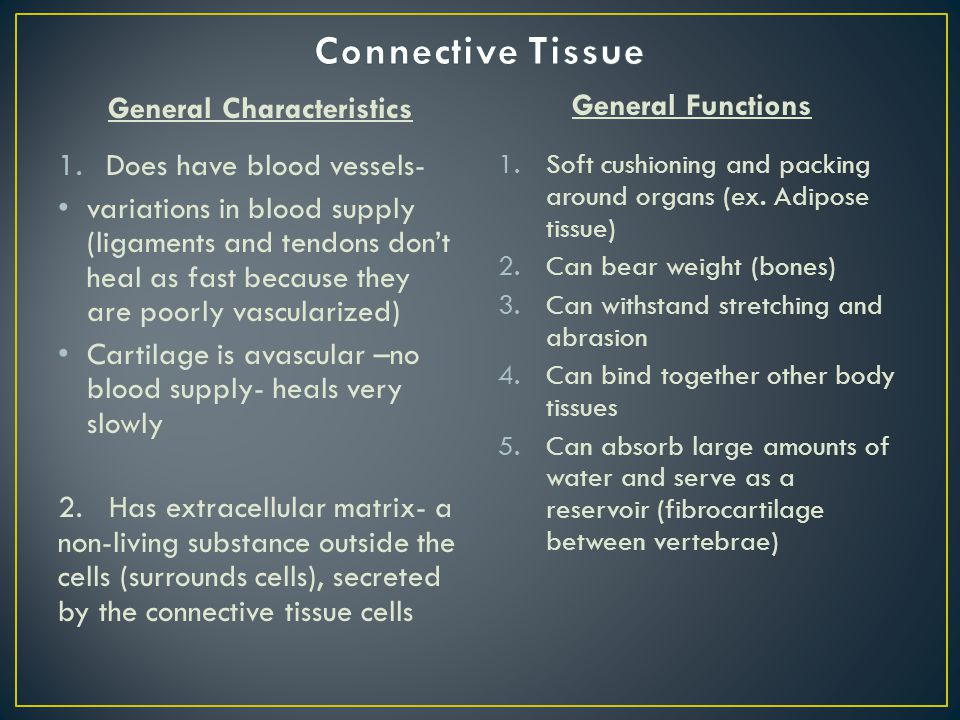 General Characteristics 1.Does have blood vessels- variations in blood supply (ligaments and tendons don't heal as fast because they are poorly vascularized) Cartilage is avascular –no blood supply- heals very slowly 2.