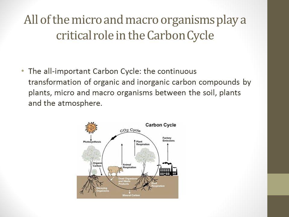 The Soil Food Web Soil organisms use soil organic matter as food.