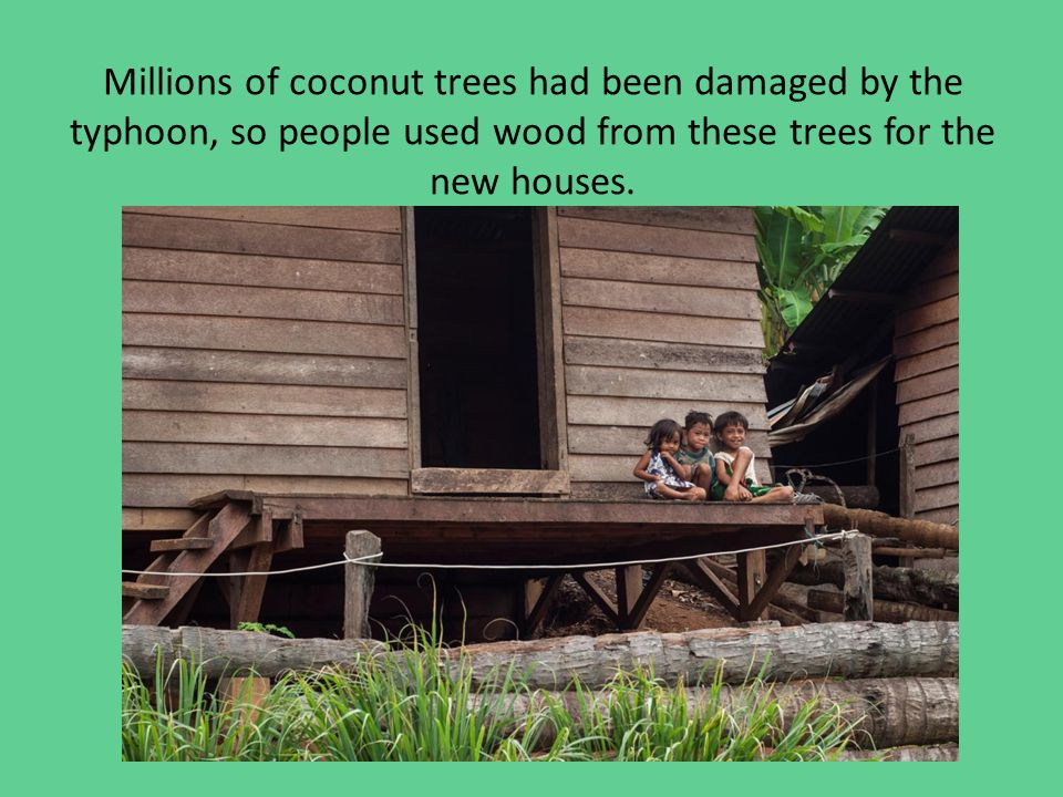 Millions of coconut trees had been damaged by the typhoon, so people used wood from these trees for the new houses.