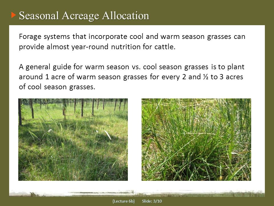 Forage Growth Seasons {Lecture 6b} Slide: 4/10 BE FAMILIAR WITH THE GROWTH PERIOD OF YOUR FORAGE In general, cool season forages produce most growth in spring, while warm season forage growth occurs between April and October.