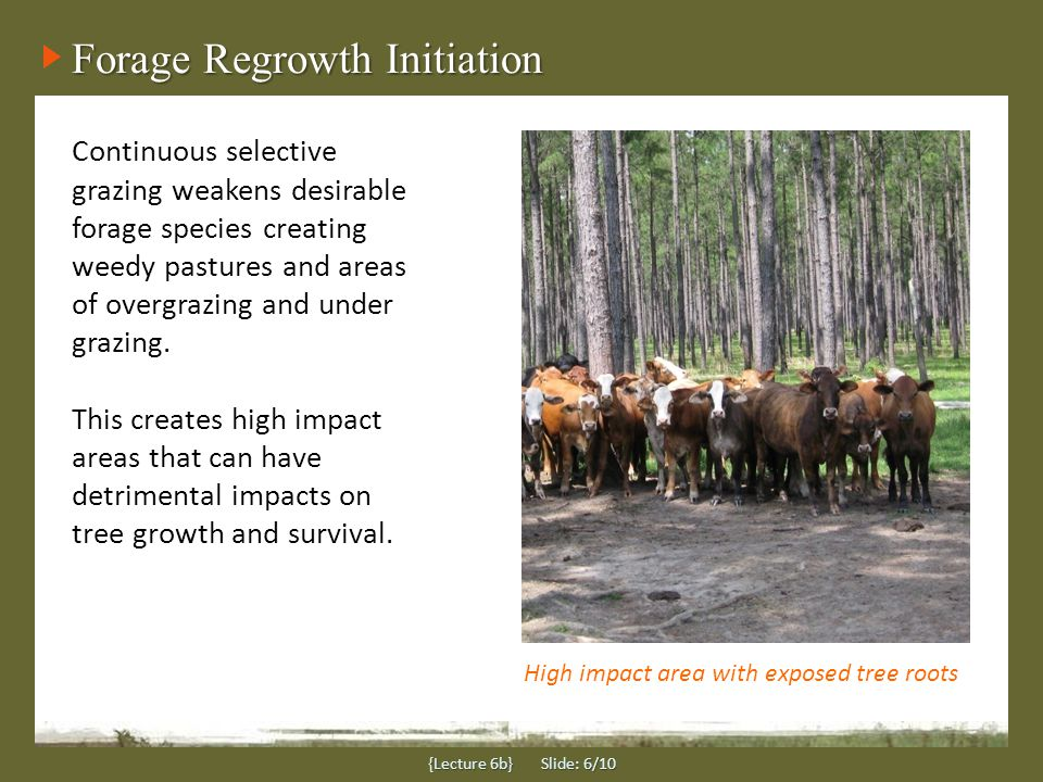 Forage Regrowth Initiation Continuous selective grazing weakens desirable forage species creating weedy pastures and areas of overgrazing and under grazing.
