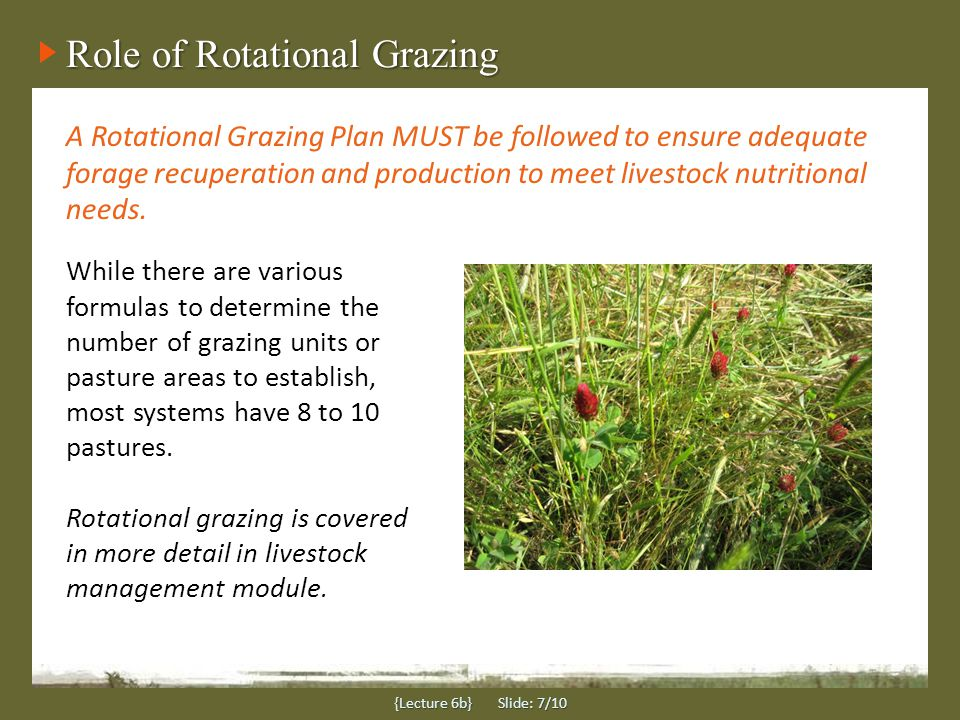Forage and herbicides {Lecture 6b} Slide: 8/10 Care must be taken for herbicide applications for both tree seedling and forage components in a silvopasture.