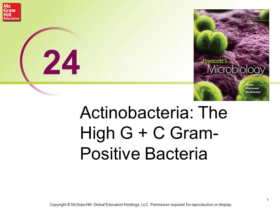 Actinobacteria: The High G + C Gram- Positive Bacteria 1 24 Copyright © McGraw-Hill Global Education Holdings, LLC.