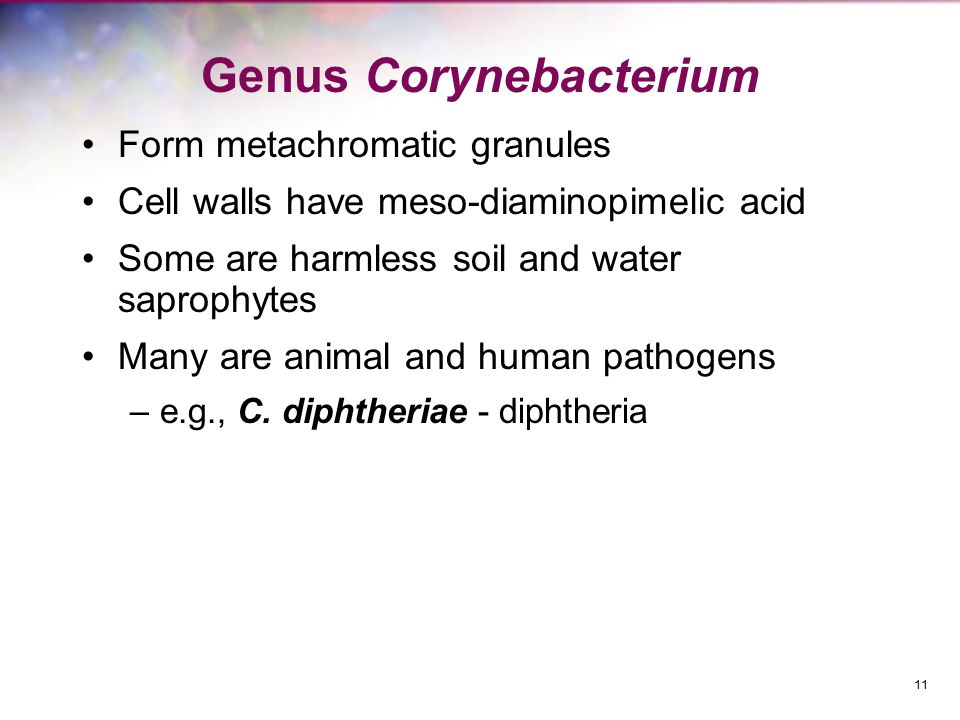 Genus Corynebacterium Form metachromatic granules Cell walls have meso-diaminopimelic acid Some are harmless soil and water saprophytes Many are anima