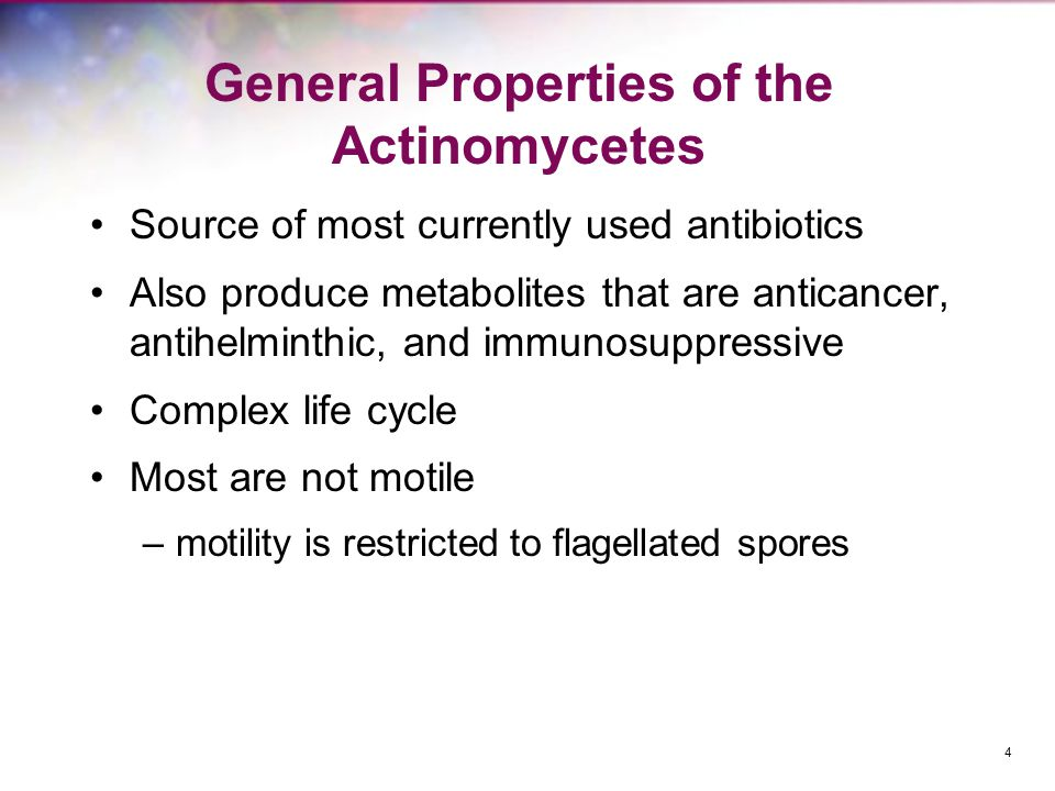 General Properties of the Actinomycetes Source of most currently used antibiotics Also produce metabolites that are anticancer, antihelminthic, and immunosuppressive Complex life cycle Most are not motile –motility is restricted to flagellated spores 4