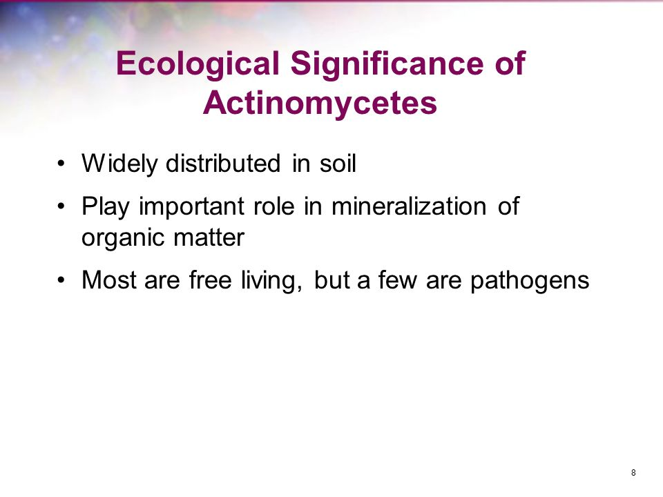 Ecological Significance of Actinomycetes Widely distributed in soil Play important role in mineralization of organic matter Most are free living, but