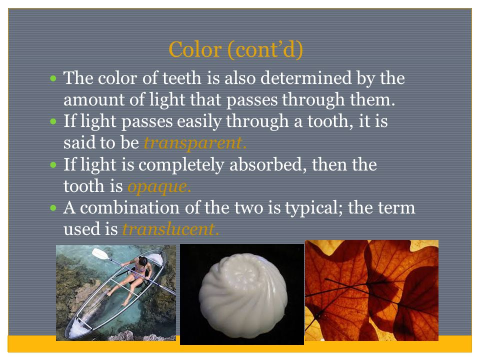 Color (cont'd) The color of teeth is also determined by the amount of light that passes through them. If light passes easily through a tooth, it is sa