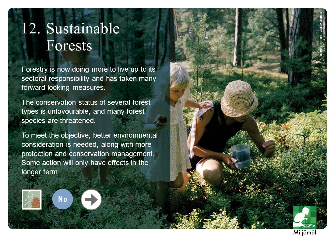 Forestry is now doing more to live up to its sectoral responsibility and has taken many forward-looking measures.
