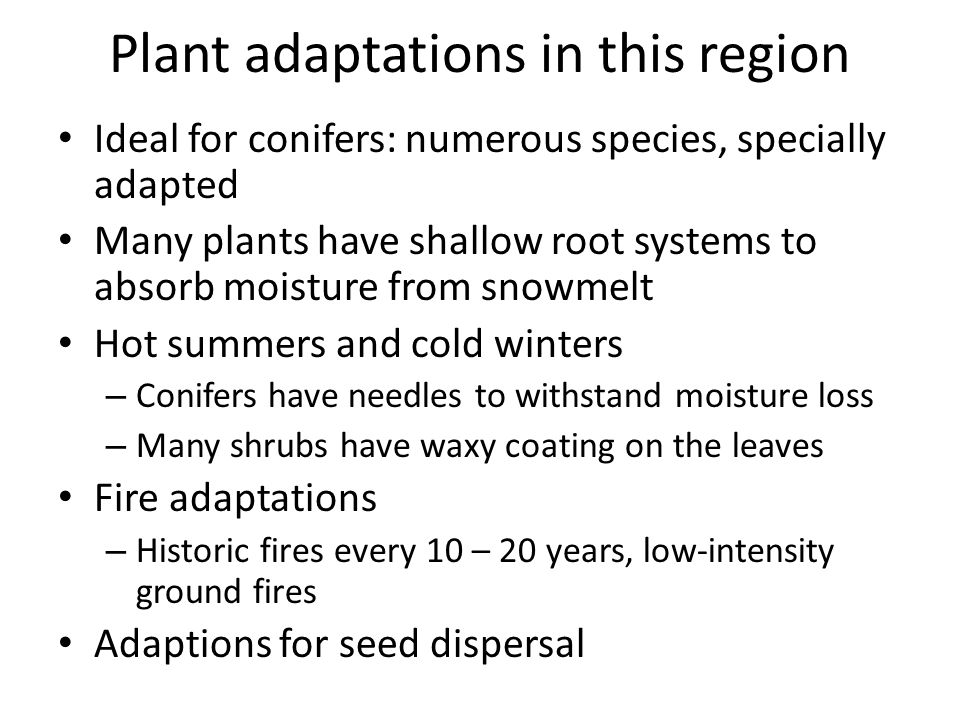 Plant adaptations in this region Ideal for conifers: numerous species, specially adapted Many plants have shallow root systems to absorb moisture from snowmelt Hot summers and cold winters – Conifers have needles to withstand moisture loss – Many shrubs have waxy coating on the leaves Fire adaptations – Historic fires every 10 – 20 years, low-intensity ground fires Adaptions for seed dispersal