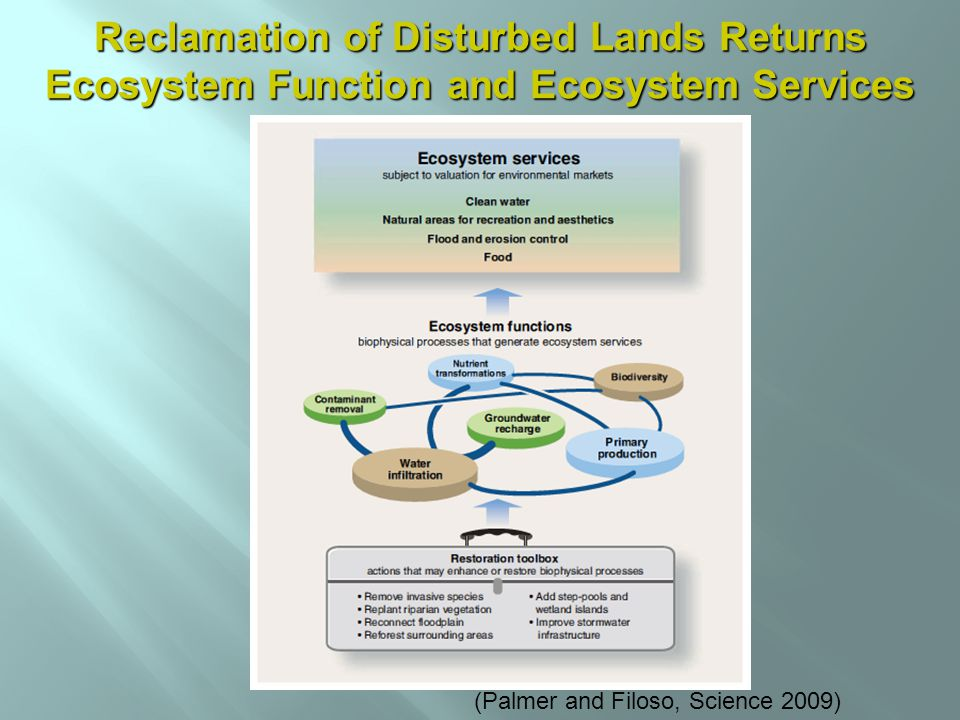 (Palmer and Filoso, Science 2009) Reclamation of Disturbed Lands Returns Ecosystem Function and Ecosystem Services
