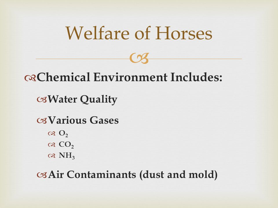   Chemical Environment Includes:  Water Quality  Various Gases O2O2  CO 2  NH 3  Air Contaminants (dust and mold) Welfare of Horses