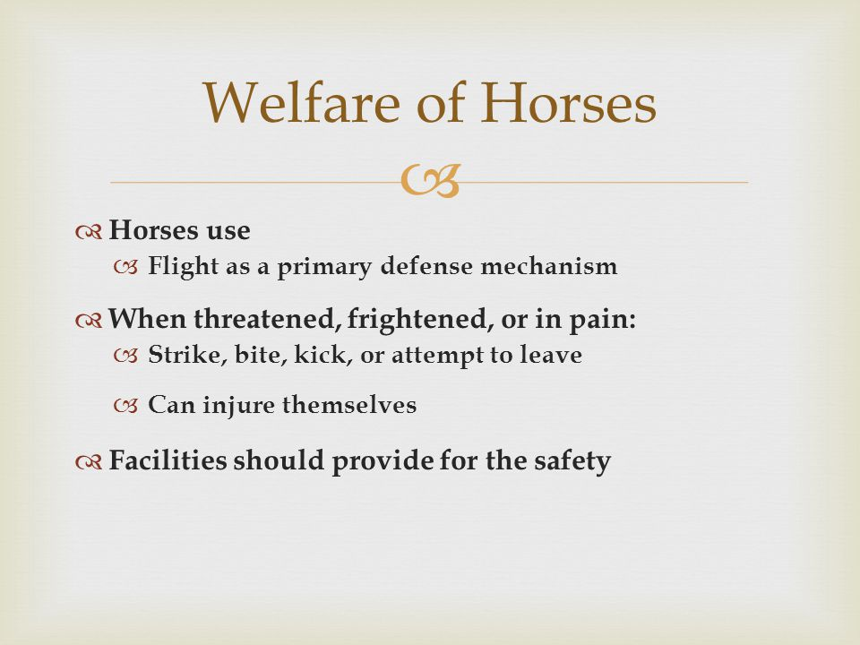  Horses use  Flight as a primary defense mechanism  When threatened, frightened, or in pain:  Strike, bite, kick, or attempt to leave  Can injure themselves  Facilities should provide for the safety Welfare of Horses